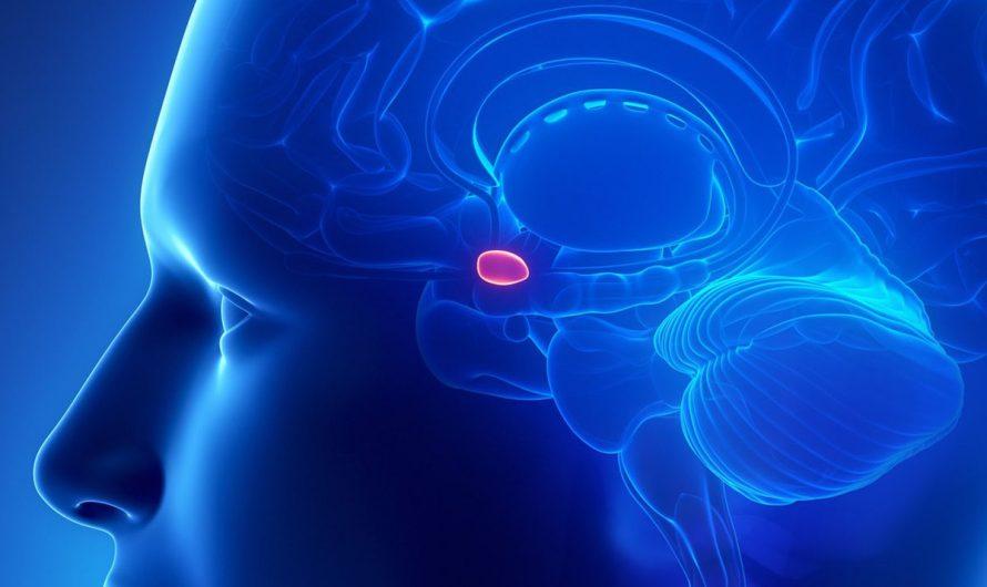 Шишковидная железа Эпифиз и ее значение для здоровья и духовного роста человека